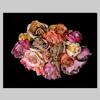 new standout oval roses